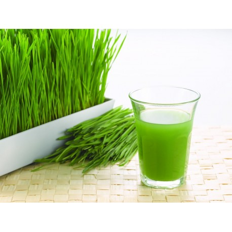 Wheat grass en polvo Organico 150g
