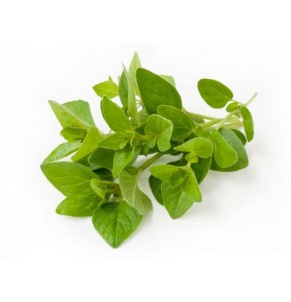 Aceite de Oregano  Organico  Silvestre 30ml