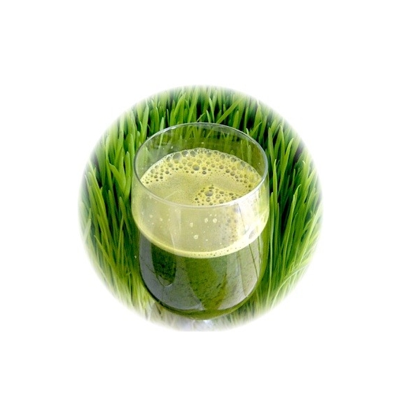 Alfalfa Grass en polvo organico 200g