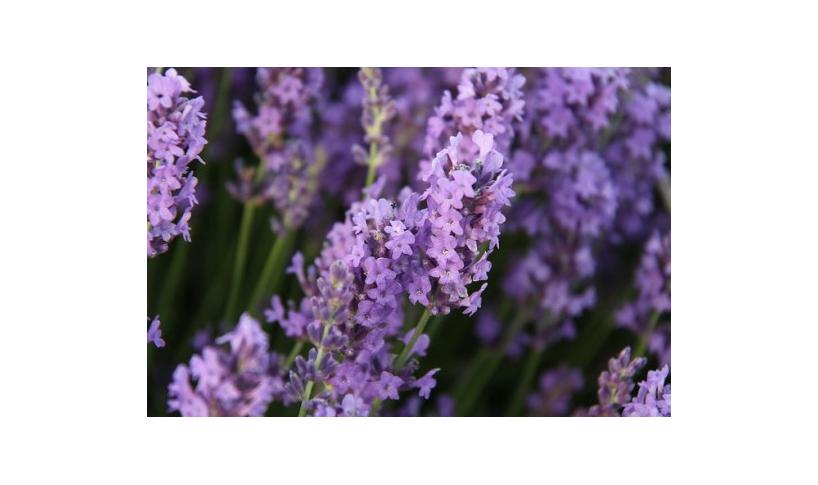 Flores comestibles orgánicas: cuáles y cómo escogerlas